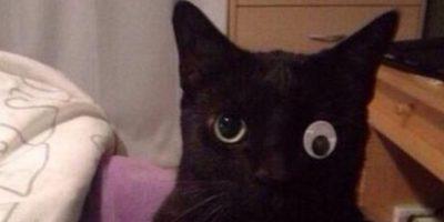 Su dueño le puso un ¡ojo de juguete! Foto:Vía Twitter: @Houseplayerz