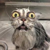 WTF! Foto:Imgur