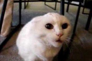 ¡Esos ojos! Foto:Reddit