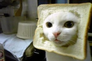 Foto:Tumblr.com/gatos/graciosos
