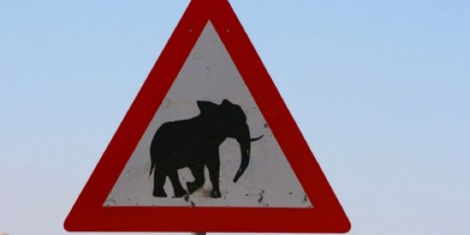 Elefantes Foto:Jmcprl.net