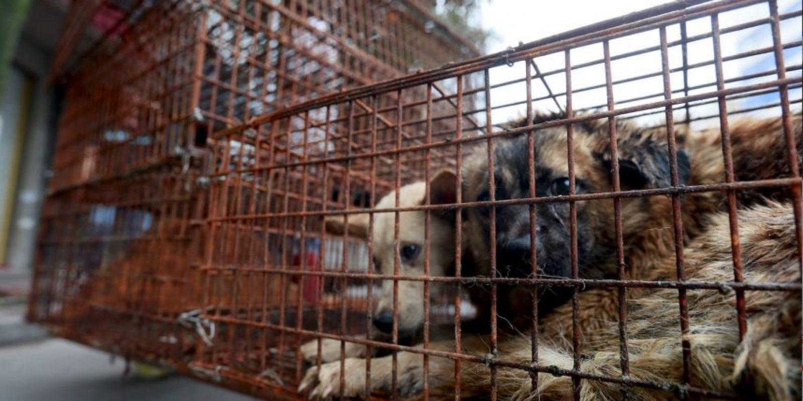 Reinician peticiones para detener un festival de China en el que se masacran perros y gatos. Foto:AP