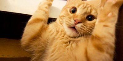 ¡Yo no hice nada! Foto:Pinterest