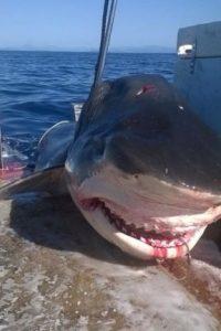 Un testigo afirmó que devoró un tiburón antes de ser asesinado. Según pescadores del lugar, había matado a varios surfistas de la zona. Foto:vía Facebook/Geoff Brooks