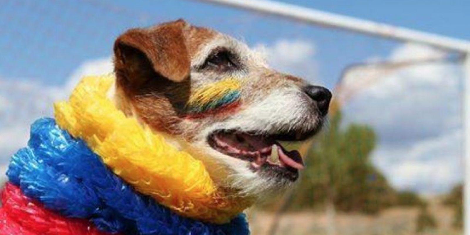 Uggie murió a los 13 años, sacrificado por un cáncer de próstata. Foto:vía Facebook/Uggie The- Artist