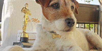 Iba a terminar en la perrera, pero Muller le enseñó obediencia. Foto:vía Facebook/Uggie The- Artist