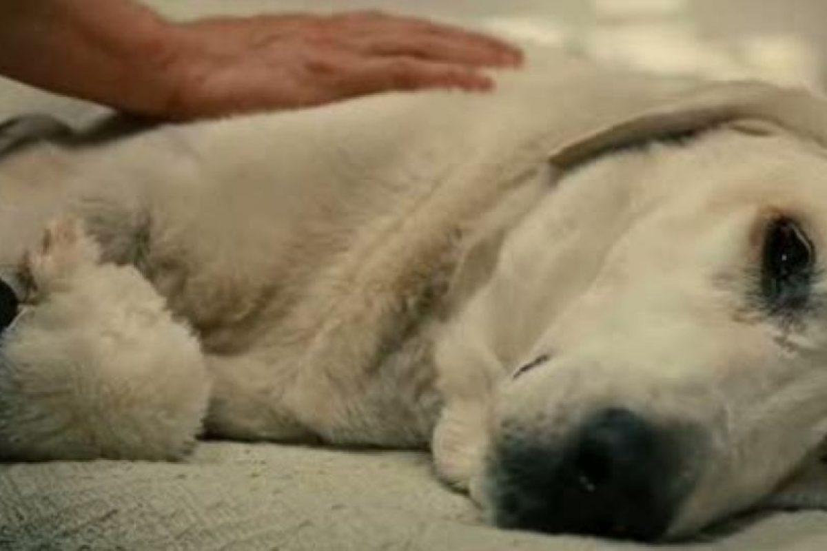 Es lo que muchos dueños de mascotas han sentido al tener que sacrificar a su amigo de años. Foto:vía Fox 2000 Pictures