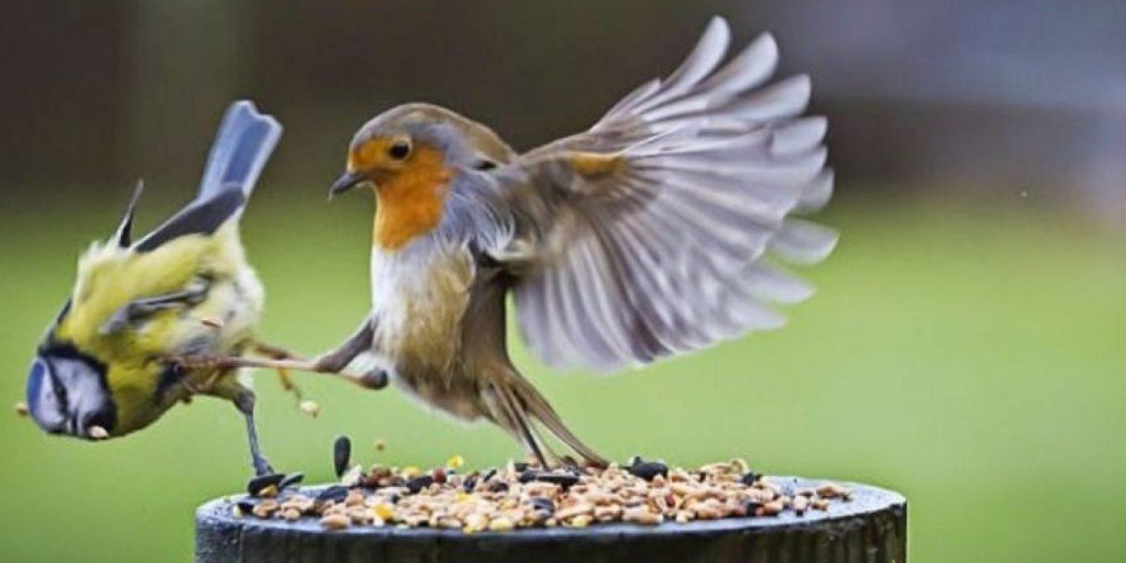 Esta ave es muy mala amiga Foto:Pinterest