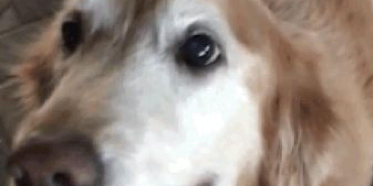 Video: Así reacciona esta perrita cuando le dicen que ya no tiene cáncer