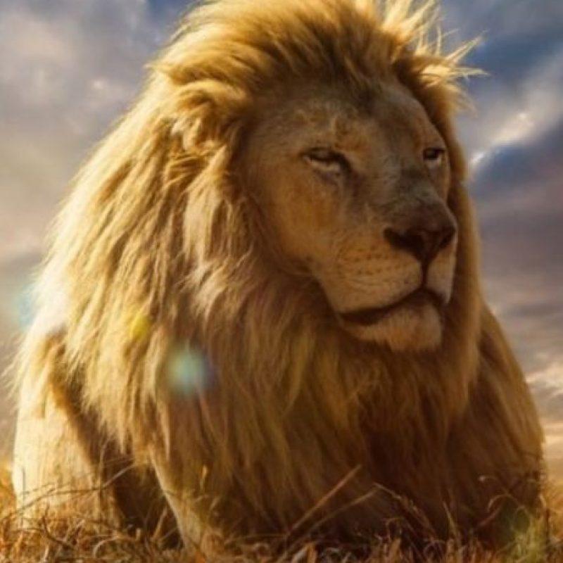 El joven especialista en el campo de biociencias moleculares dio a conocer que Cecil no era querido en su aldea ni en las cercanas, ya que las familias se veían amenazadas constantemente tanto por leones como por otros animales salvajes. Foto:Vía Instagram/#Cecil