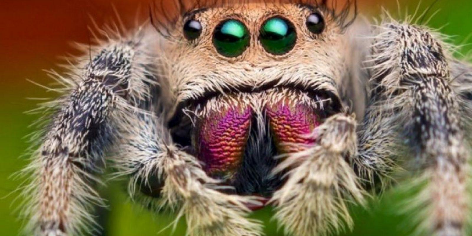 Se adapta el animal, no agresivo, ante la persona. Foto:vía Getty Images
