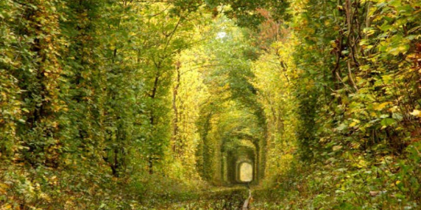1. Túnel del amor en Ucrania Foto:Wikimedia