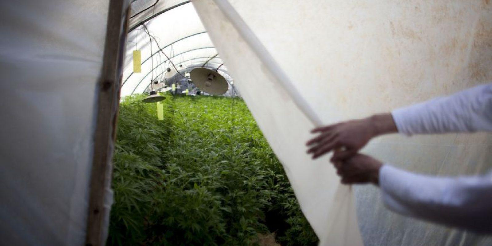 9. Diversas personas se han adjudicado la creación del 420 en relación a la marihuana. Foto:Getty Images