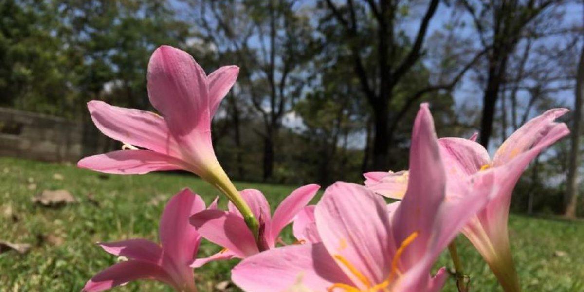 FOTOS. ¿Sabes qué anuncian estas flores?