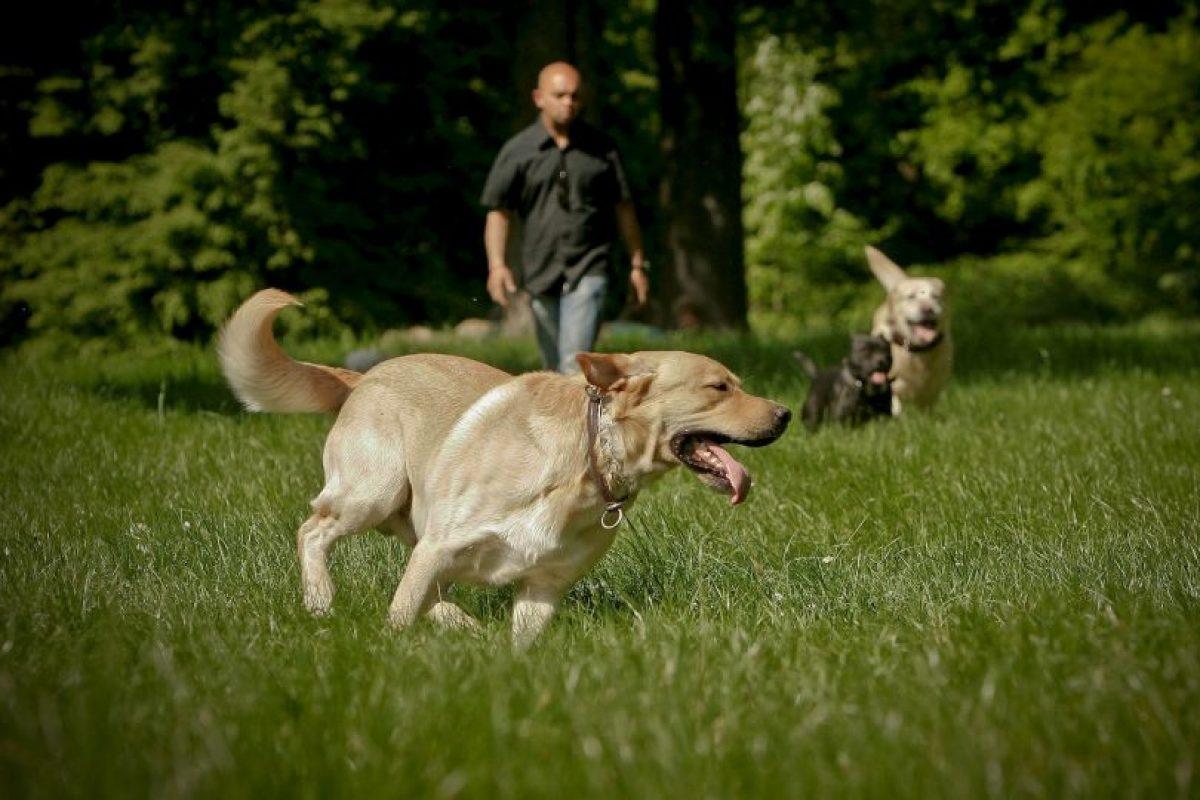 """""""Los hallazgos corroboran la existencia de un vínculo entre especies mediante la oxitocina y facilitado por el cruce de miradas"""", se informó en la investigación. Foto:Getty Images"""