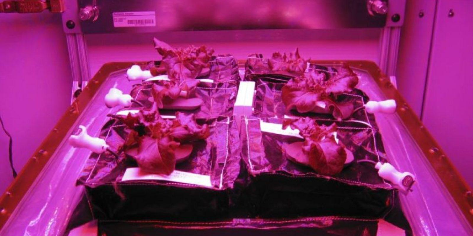 4. ¿Cuál es la diferencia de cultivar comida en el espacio y en la Tierra? Foto:Facebook.com/NASA