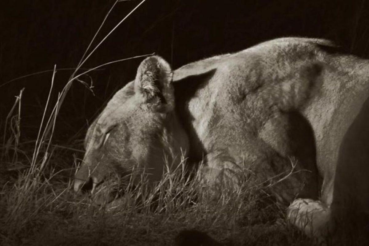 """Una de las parejas de """"Cecil"""" Foto:Facebook.com/africanbushcamps"""