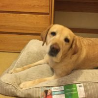 Son una organización no gubernamental que brinda asistencia a las mascotas en problemas en la región Foto:Facebook.com/redpawteam