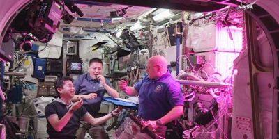 Astronautas comen vegetales cultivados en el espacio