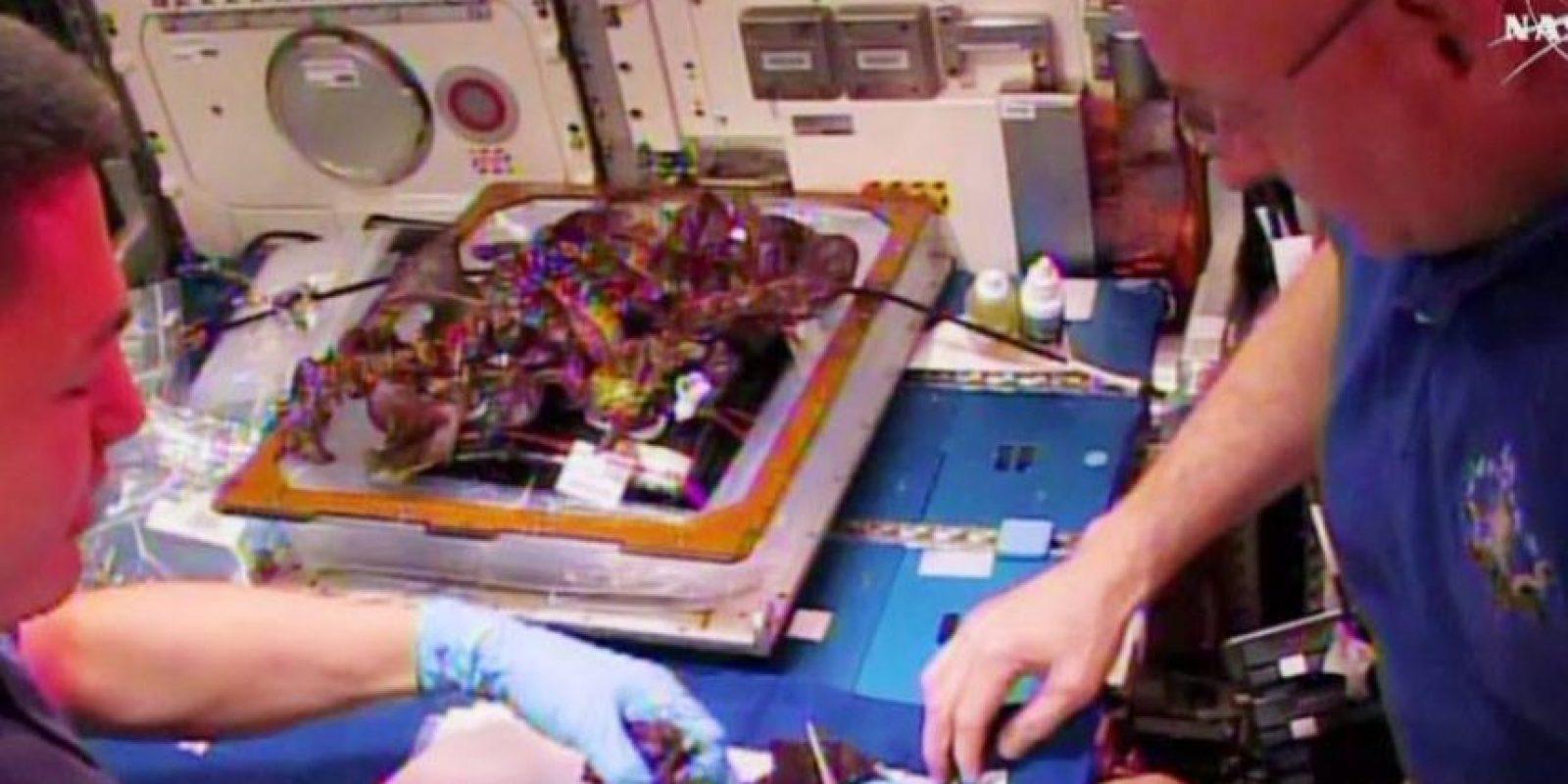 """""""No se detectaron problemas cuando analizamos el primer lote cultivado el año pasado. Como precaución, los astronautas desinfectaron la lechuga antes de comerla (nunca olviden lavar sus verduras en el fregadero antes de comerlas)"""". Foto:Facebook.com/NASA"""