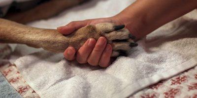 Esto puede explicar por qué se considera que los perros son útiles para tratar el autismo y ayudan a las personas que sufren estrés postraumático Foto:Getty Images