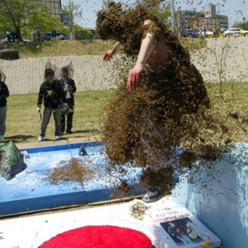 Los zánganos, son exclusivamente abejas macho, solo existen un centenar por colmena, y su presencia esta destinada a fecundar a la abeja reina, no pueden alimentarse por sí mismos porque no tienen aguijón asi es que deben ser alimentados por las obreras. Foto:Getty Images