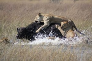 Ellos huyen y se quedan en casa. Foto:vía Wikipedia