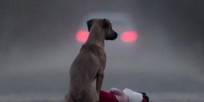 VIDEO. Duro mensaje para aprender el significado de la adopción de mascotas