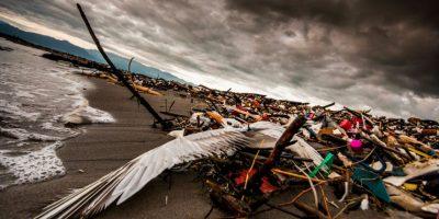 Fotografía. Muestran un mal manejo de los desechos plásticos
