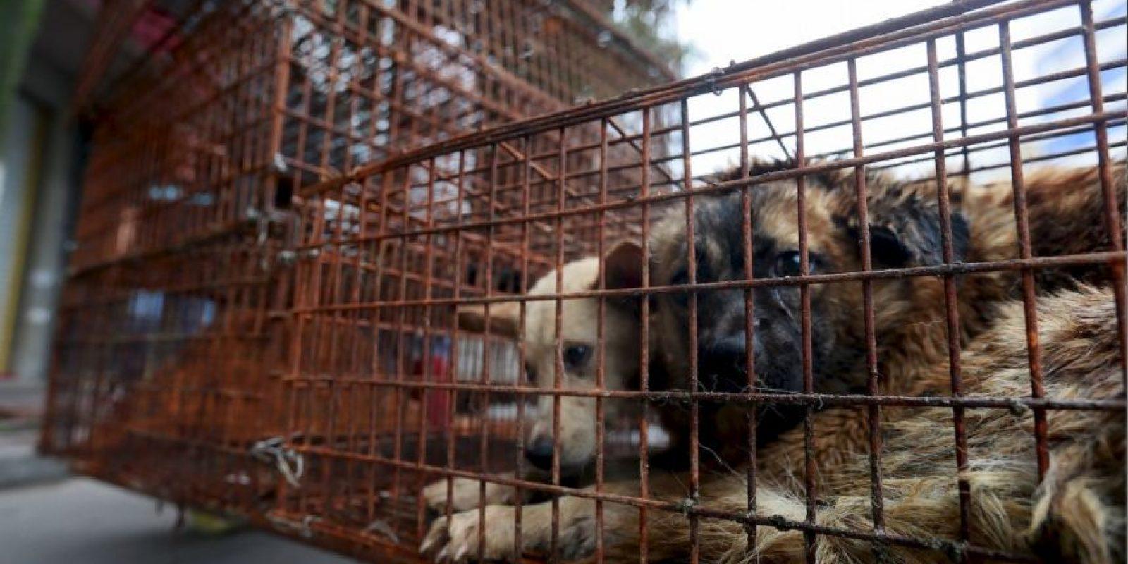 Cada año se sacrifican cerca de 10 mil perros, de acuerdo a activistas protectores de animales Foto:AP