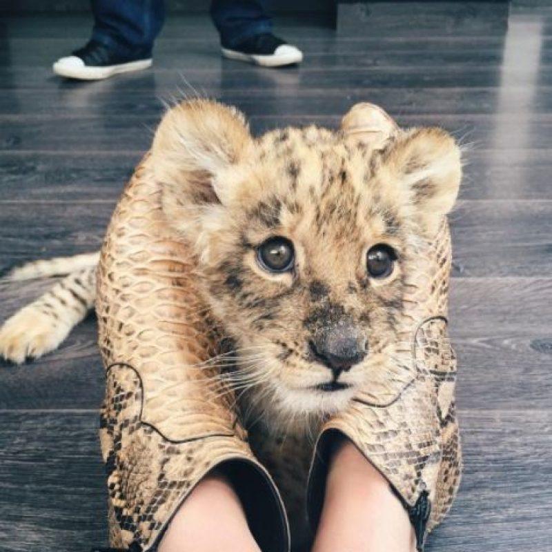 Su misión es rescatar y proteger a los animales indefensos. Foto:vía instagram.com/kendalljenner