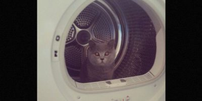 Otros prefieren esconderse en los electrodomésticos Foto:Twitter – Archivo