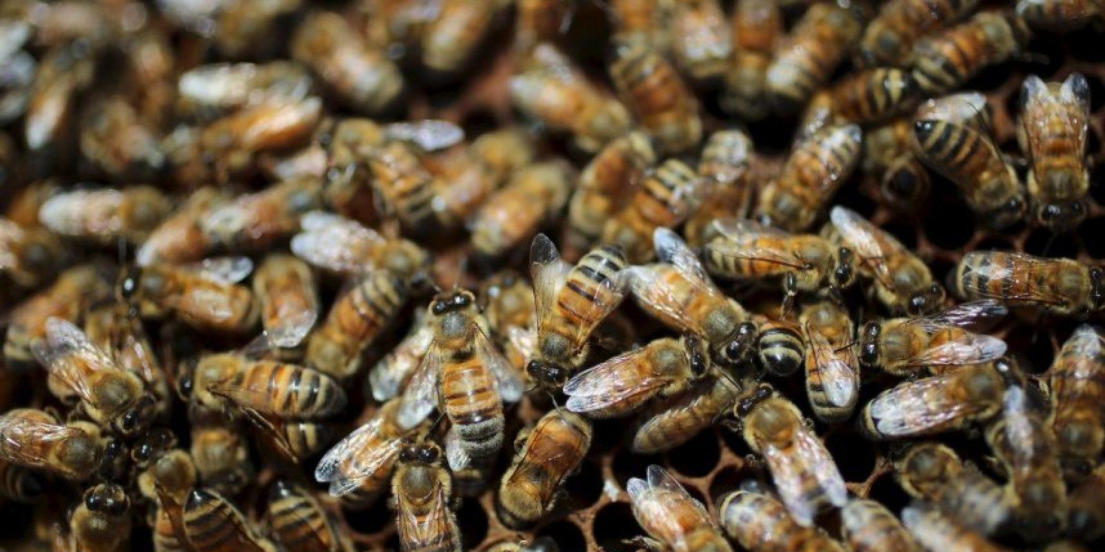 Gao Bingguo, impuso un nuevo récord mundial, después de que cubriera su cuerpo con un millón de abejas. Foto:Getty Images