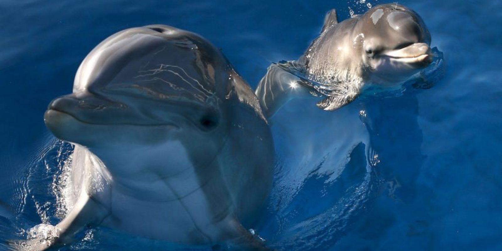 Hamas señaló que detuvo a un delfín espía proveniente de Israel. Foto:Getty Images