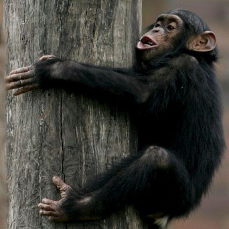 Mucho de sus síntomas de embriaguez coinciden con los del ser humano. Foto:Getty Images