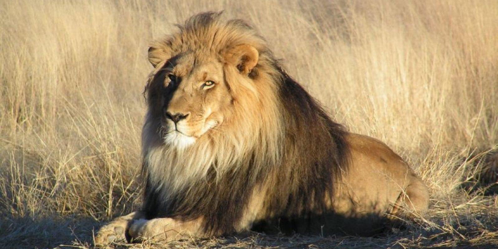 Y los que mandan en la selva. Foto:vía Wikipedia
