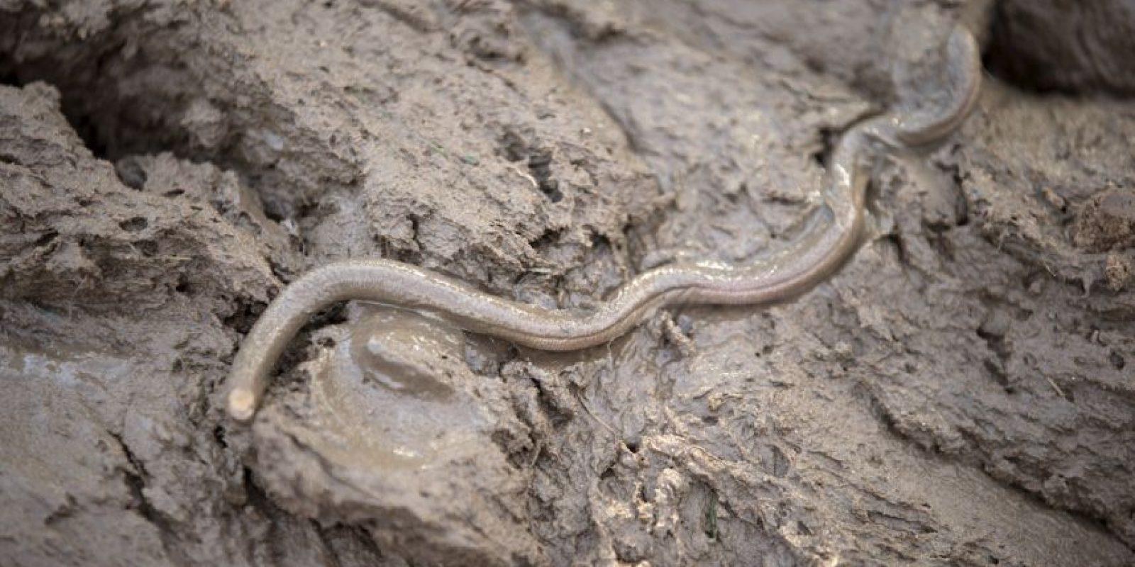 Una serpiente pasa por el campo Ñu Guazú Ángelus, donde Francisco ofició su última misa en América Latina Foto:AP