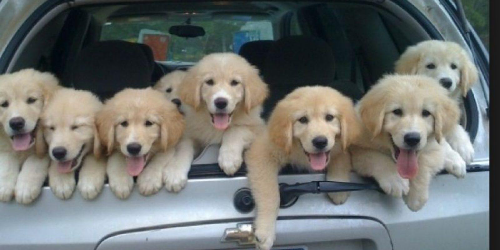 Los cachorritos esperando la partida Foto:Turismo