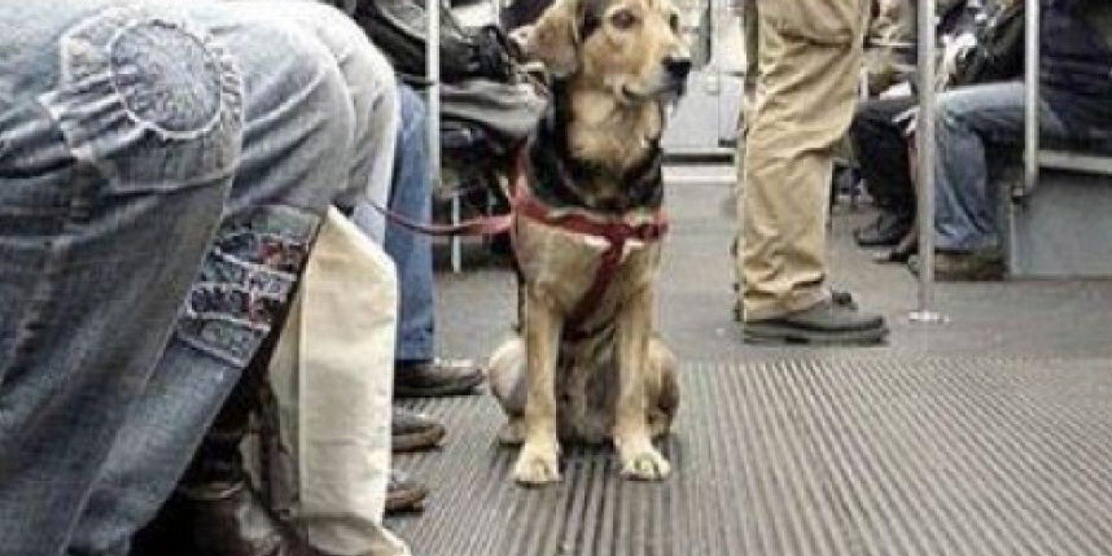 Este perrito ya está acostumbrado a viajar en metro Foto:Tumblr.com/tagged/perro/viaje
