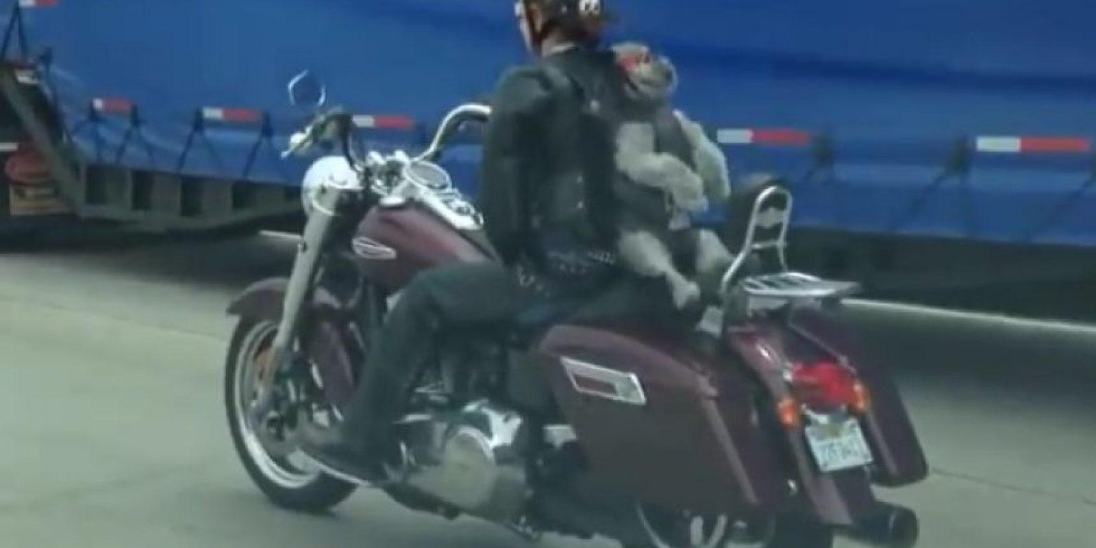 Sentado sobre la moto de su dueña Foto:Vïa Youtube/Shawn White
