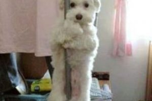 ¿Pole dance? Foto:Tumblr