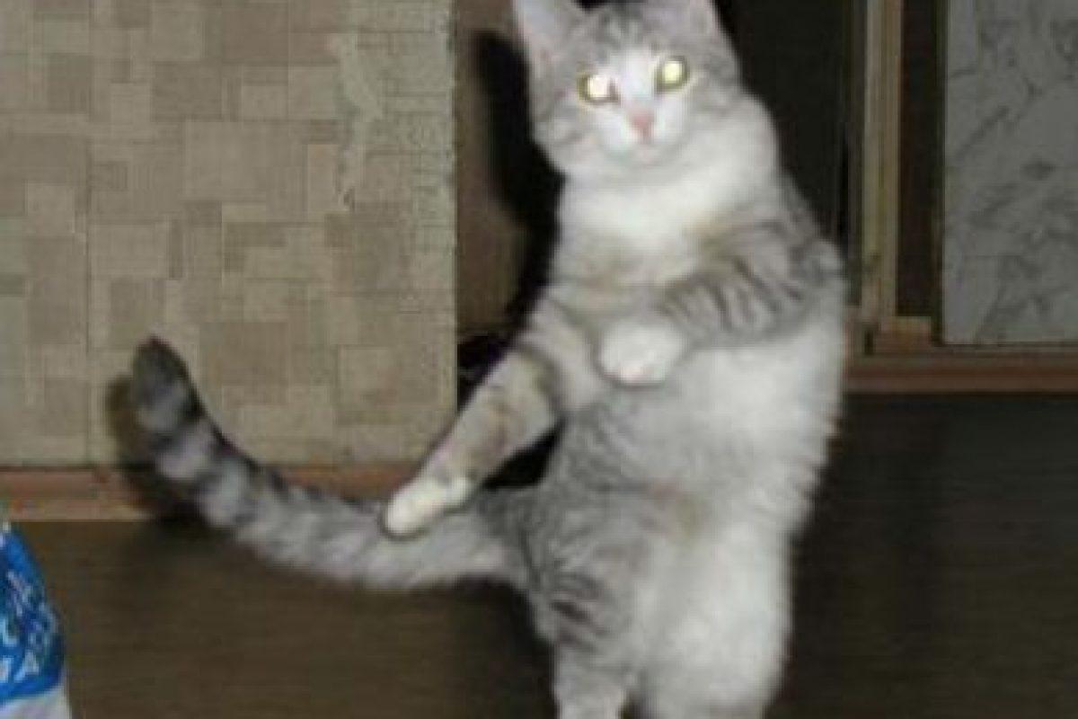 Sabe mover las caderas Foto:Reddit