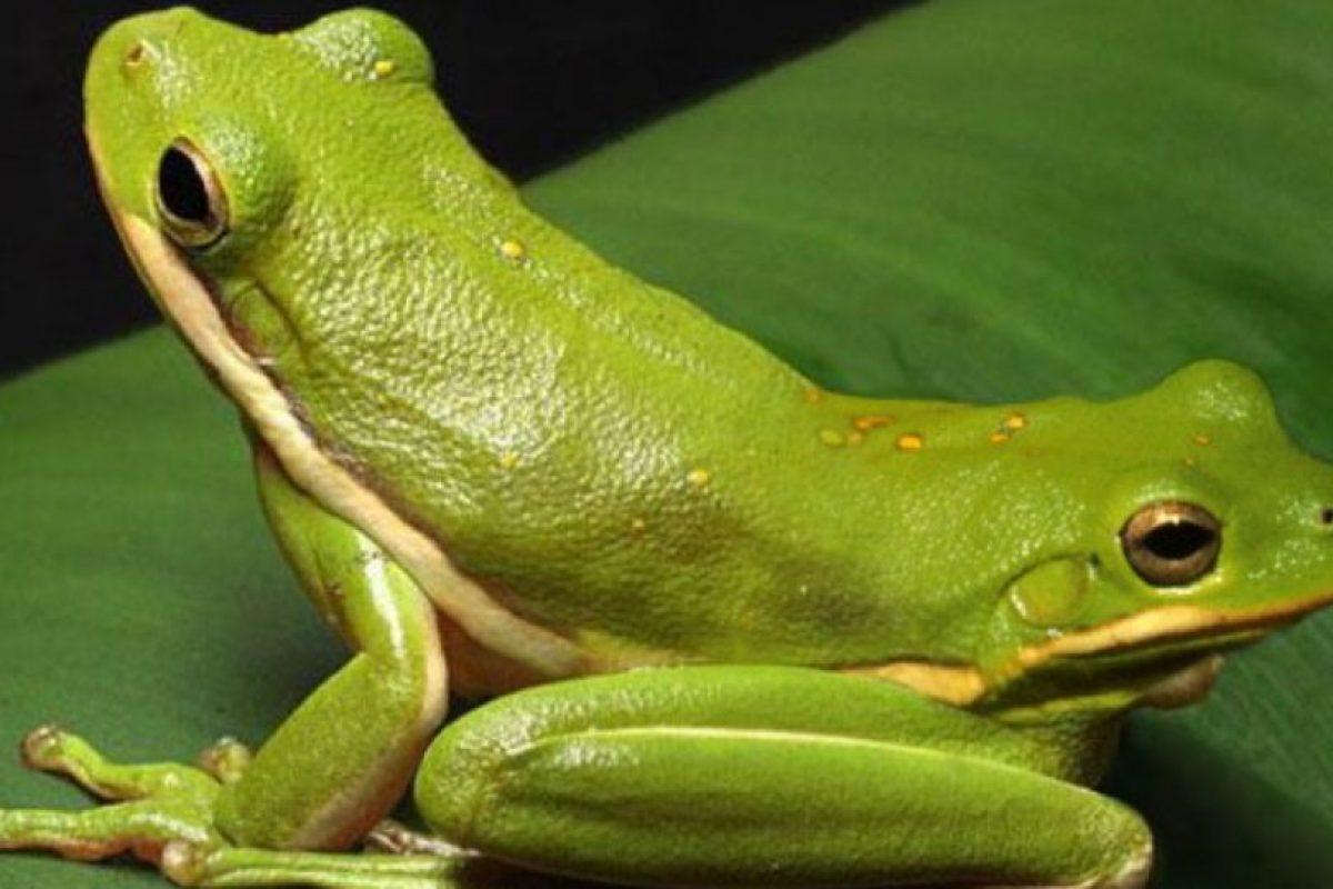 Siempre se ha considerado un animal con dos cabezas y no dos. Foto:vía Animal Planet