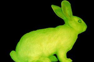 En la Universidad de Hawai, los científicos pusieron a varios conejos fluorescentes. Foto:vía Universidad de Hawai