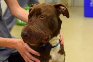 Hallaron a su dueño, en Charleston, Estados Unidos, y lo capturaron. Foto:vía Charleston Animal Society