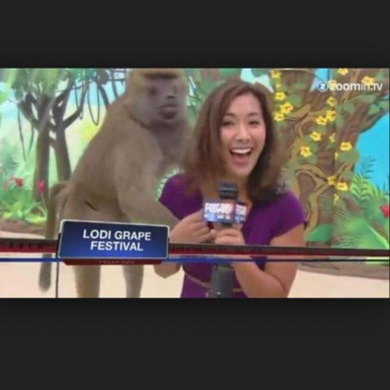 Esta periodista fue sorprendida por un primate. Foto:Vía Youtube