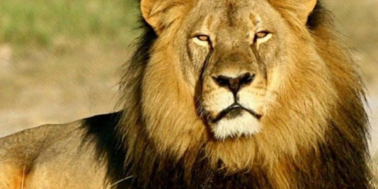 """""""La gente de Zimbabue nos preguntamos por qué los americanos se preocupan más por los animales africanos que por la gente de África"""". Foto:Vía Instagram/#Cecil"""