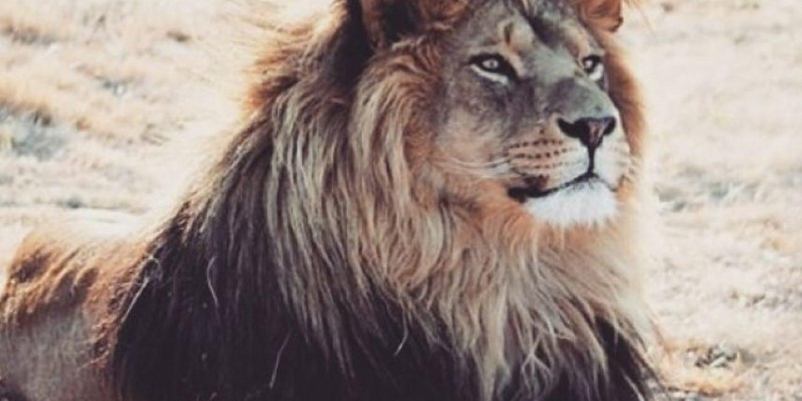 Foto:Vía Instagram/#Cecil