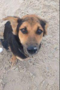 Este perrito inválido fue encontrado en las playas de Tailandia. Foto:vía Facebook/Jamie Smith