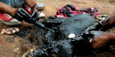 De esta manera, Animal Aid Unlimited procedió a rescatarlo. Foto:vía Facebook/Animal Aid Unlimited